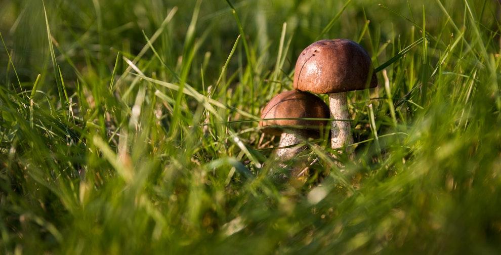 paddenstoelen in gazon voorkomen