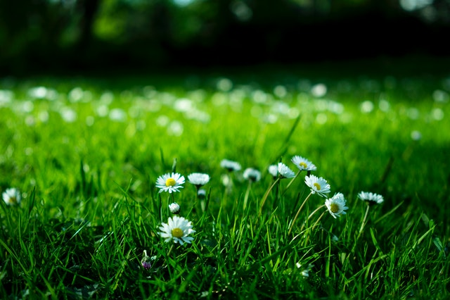 groen in de tuin