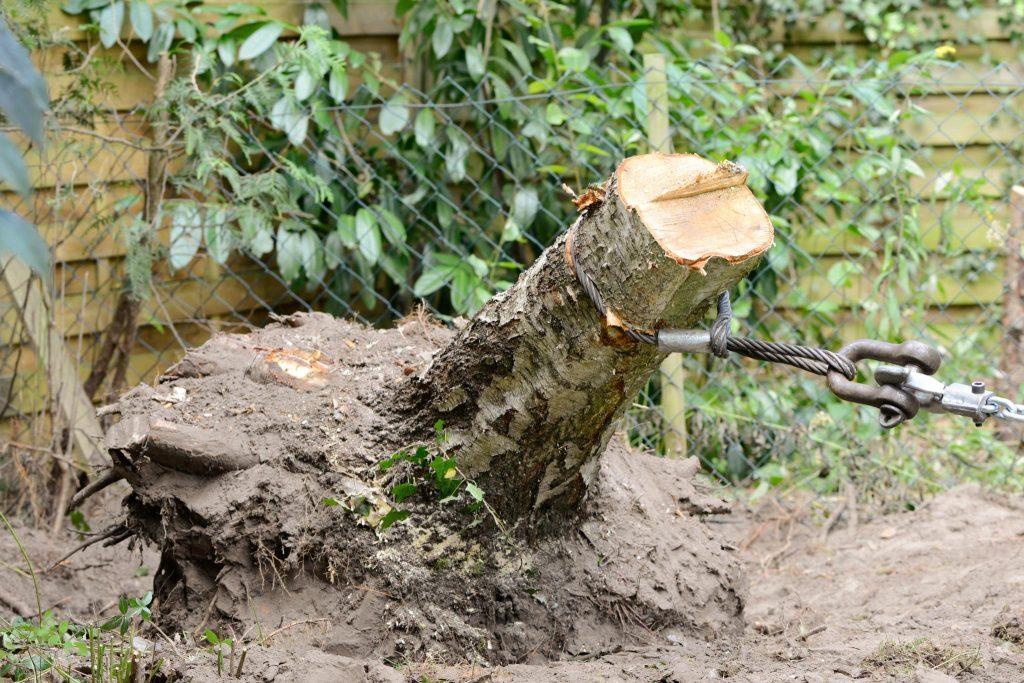 boomstronk verwijderen uit de tuin