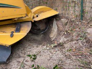 boomstronk verwijderen met een frees
