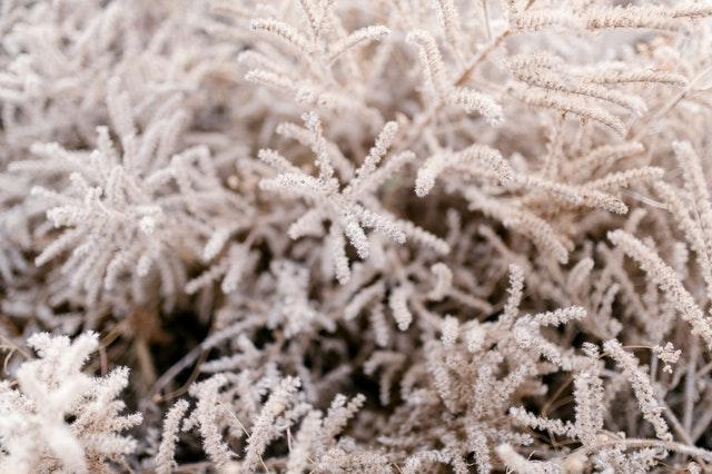 tips tuin winterklaar maken